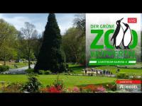 Grüner Zoo Wuppertal - Elefantenanlage open webcam