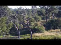 Djuma Private Game Reserve open webcam