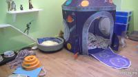 Los Angeles - Kitten Rescue Sanctuary open webcam