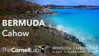 Bermuda - Nonsuch Island open webcam