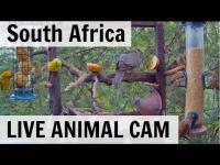 Pretoria - Live Animals open webcam